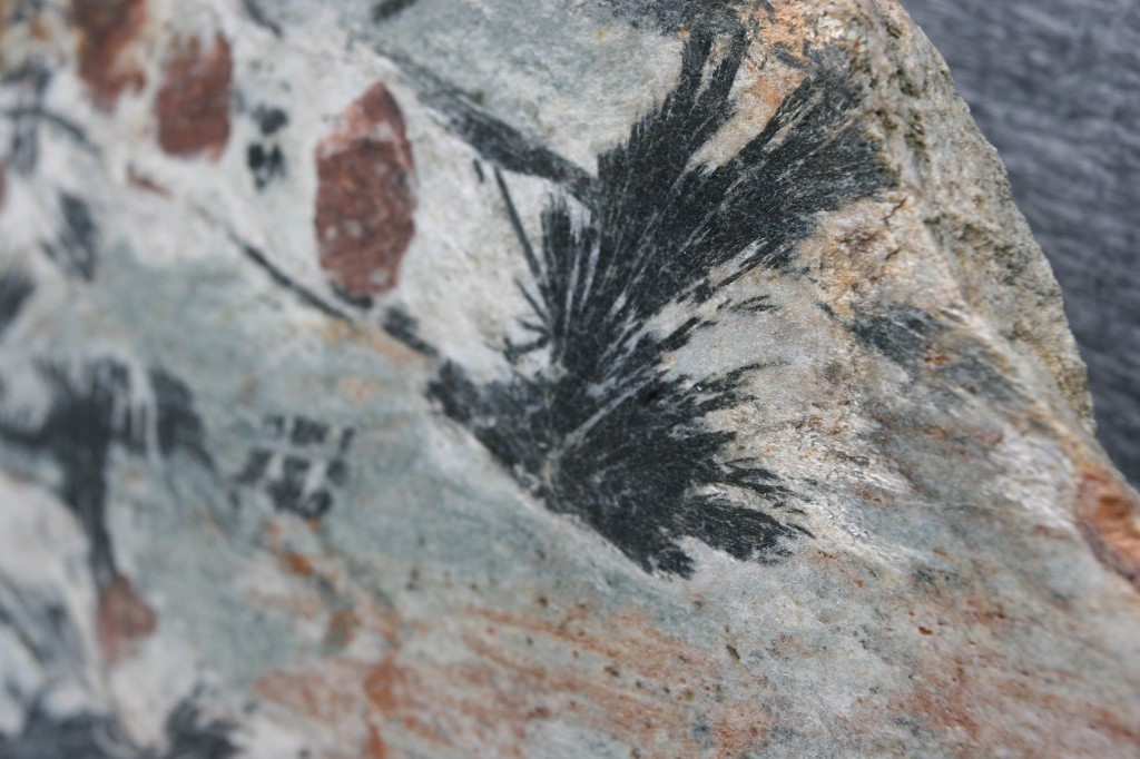 They call this the Crow's Foot Schist. Certainly looks like crows flying to me.