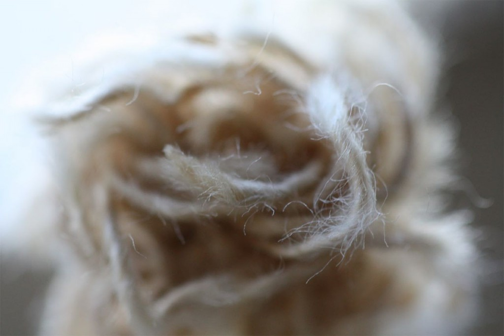 A frayed knot. Ok, really, a snapped window sash rope. Too gorgeous.