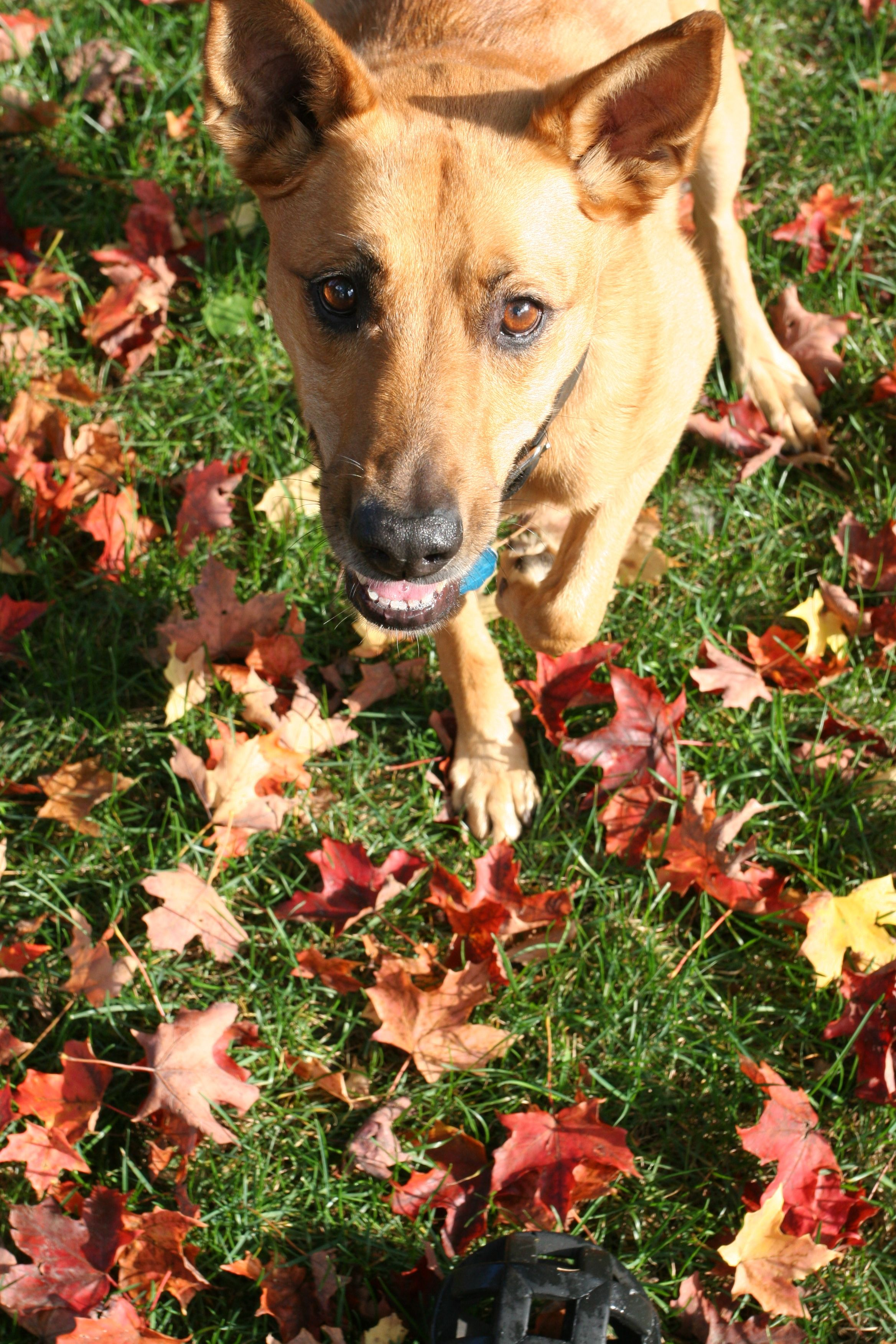 Beauty shot: the beast, in her autumnal habitat.