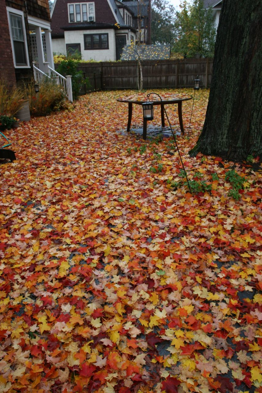 Yes, we did rake on Sunday. And bagged 6 bags of leaves, and 4 bags of grass trimmings. I swear we did.