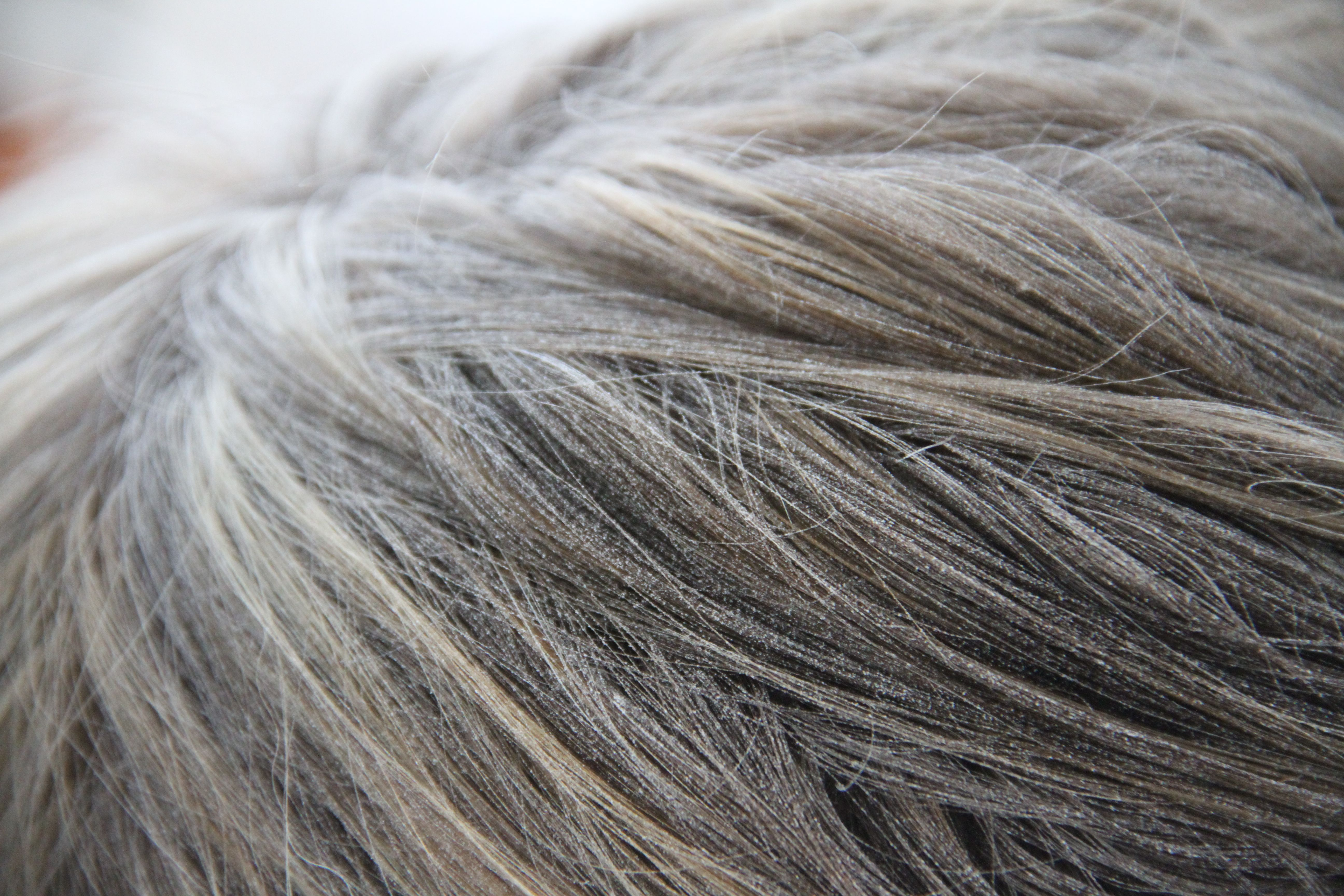 No, I didn't go grey overnight... I was just covered with joint compound dust. Highly unpleasant.