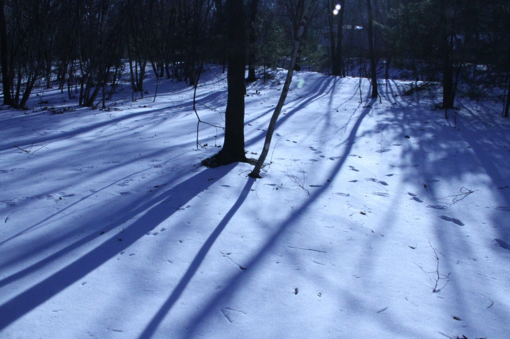 Long shadows = wintertime.