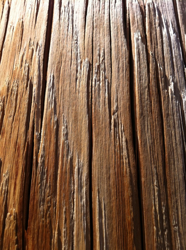 The most beautiful utility pole ever. (See, I DID manage a beauty shot!)
