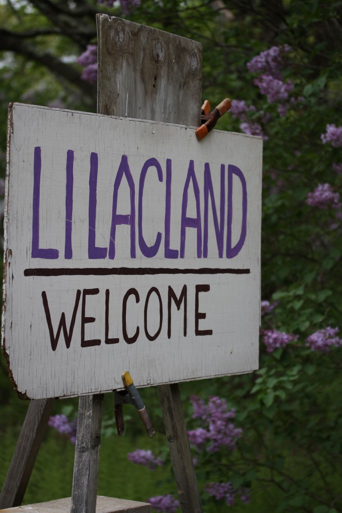 Welcome to Lilacland indeed.