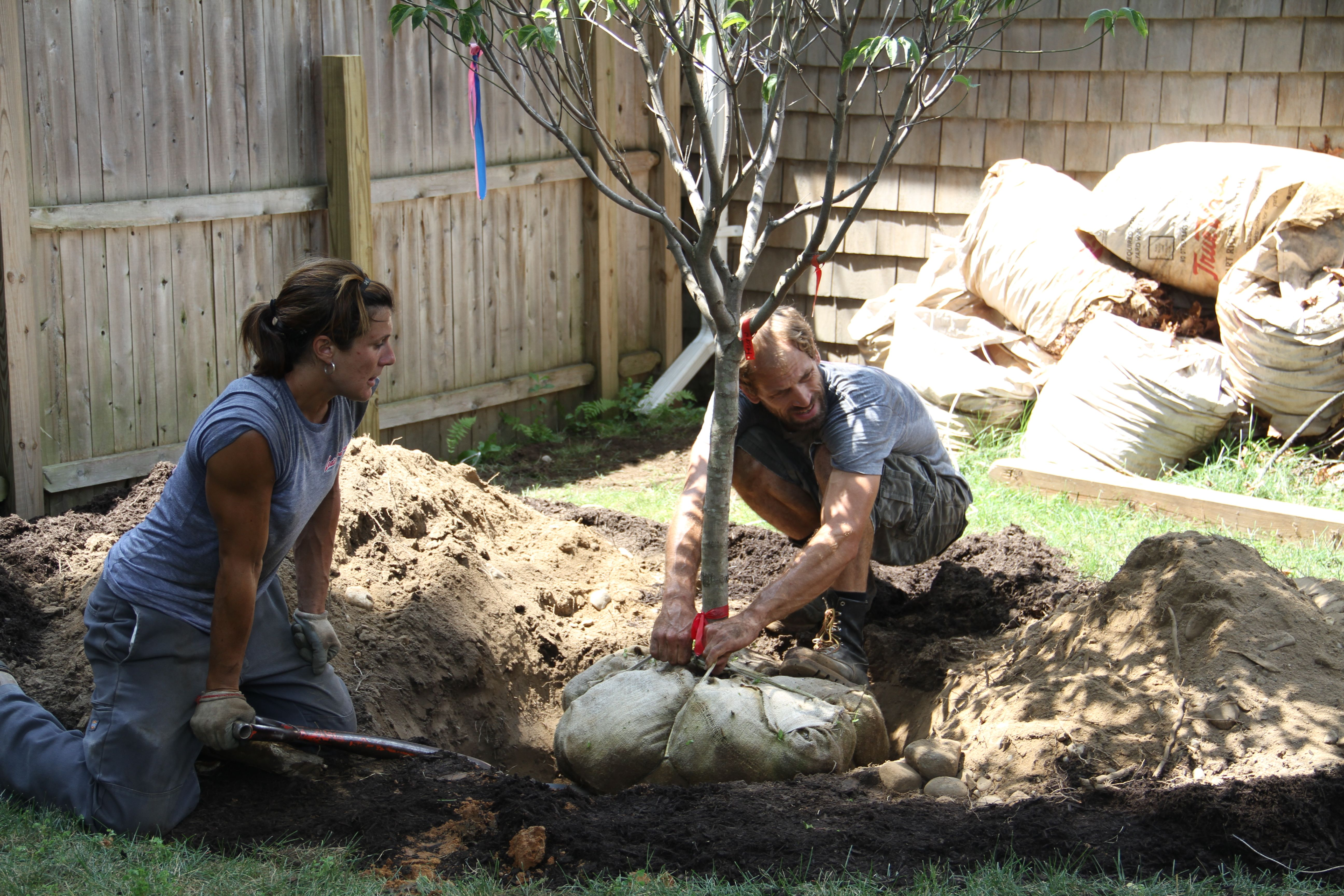 They looked at it from all sides to make sure the tree would grow correctly, and back filled it with soil and loam.