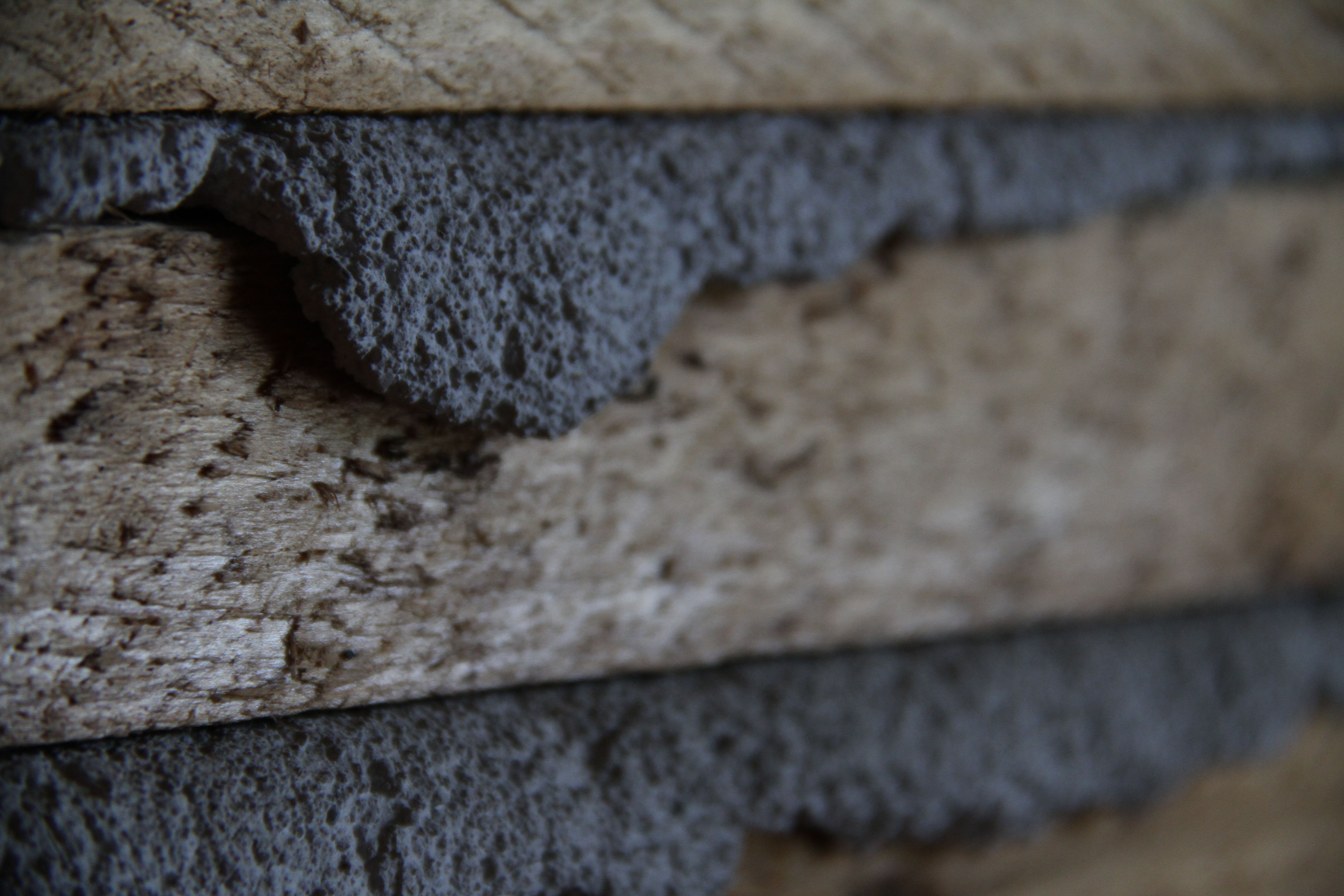 Beauty shot: plaster & lathe. I've been tinkering with camera settings, sometimes to good effect.
