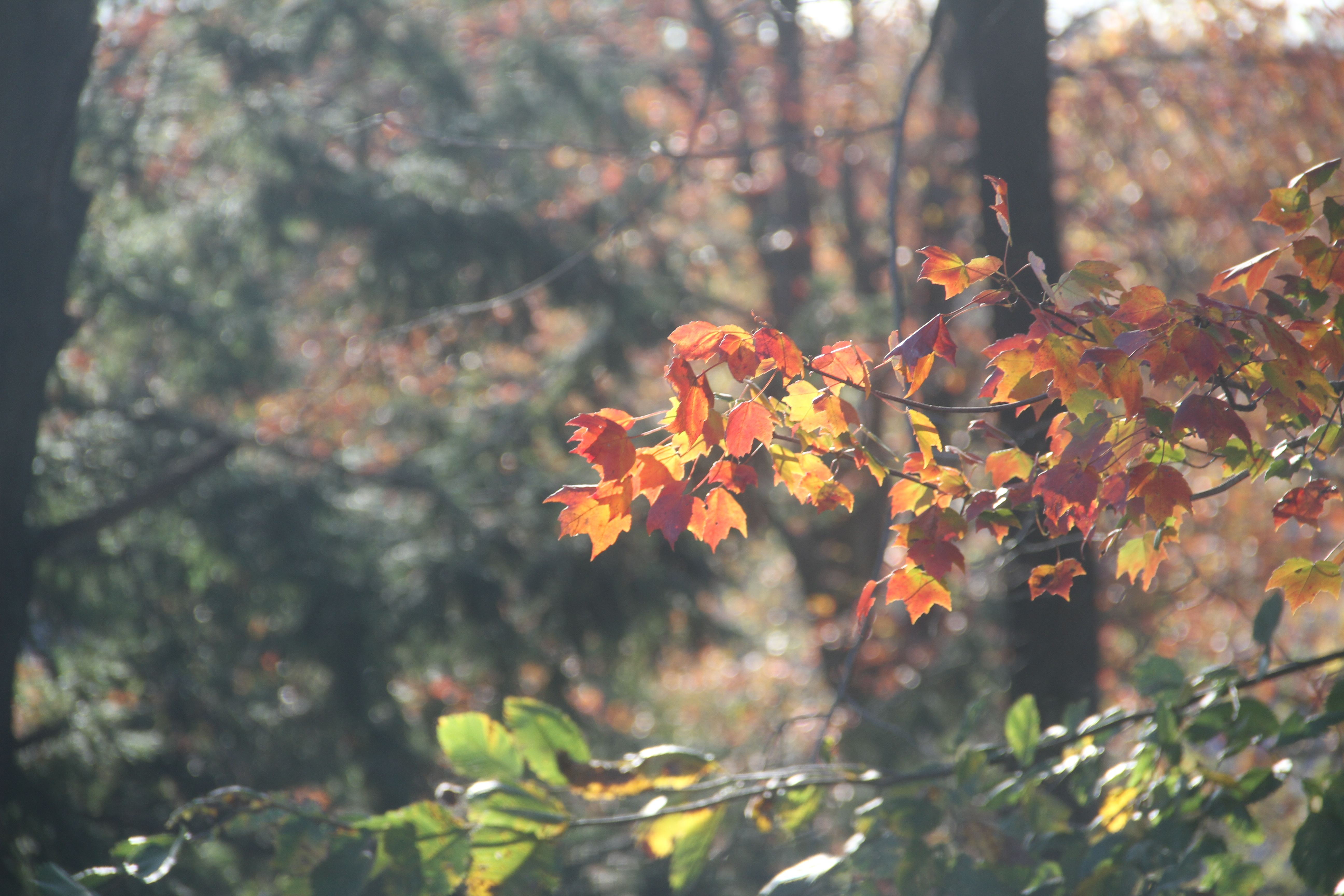 Beauty shot: autumn. Yeah, New England is pretty beautiful (no matter how many times you see it!).