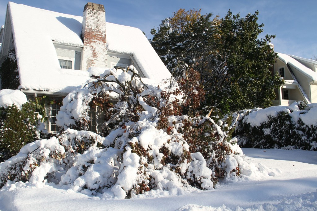Our other neighbor suffered some of the worst offenses: his lovely dogwood lost so many limbs, and his two story lilacs (not pictured) were ripped from his house. Sadly, they remain horizontal and are likely never to perfume our yard again.