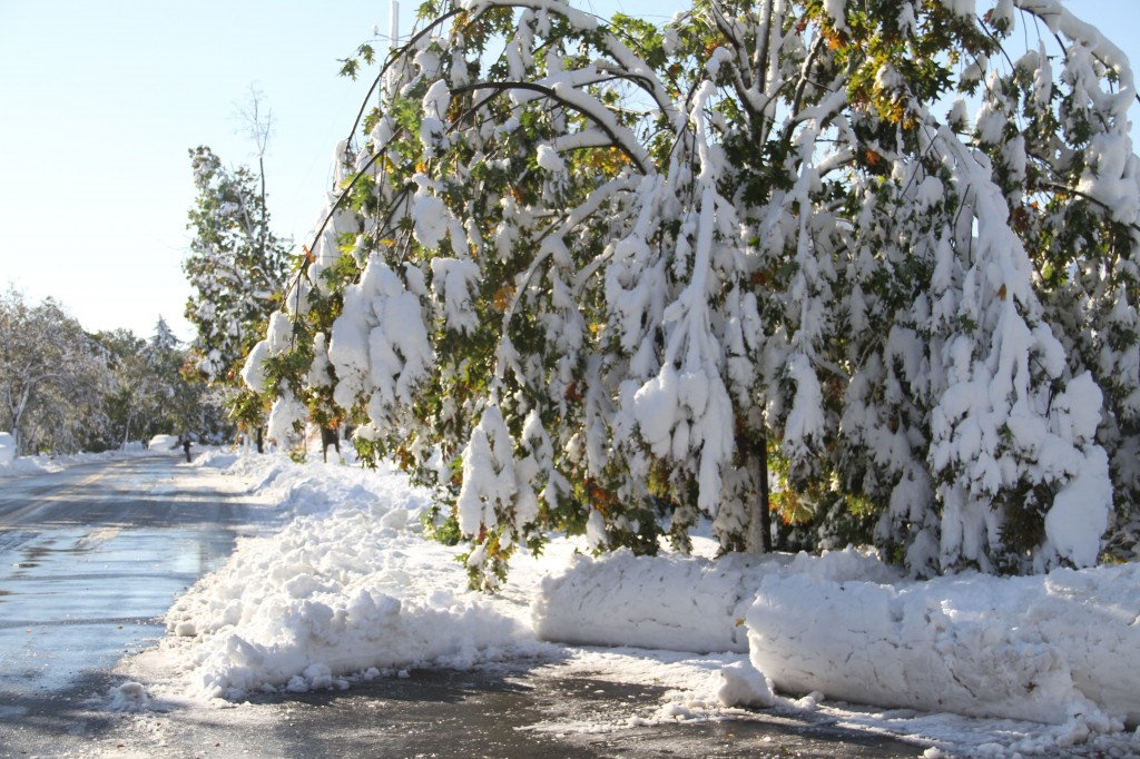 Even though the snow pinned many of the trees' arms to the ground for hours and hours, many of them have rebounded in subsequent days. It was quite a sight.