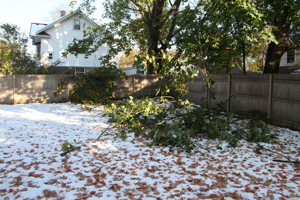 Our yard was littered with large limbs and branches that tangled the phone, cable and power lines across the fences and through the remaining tree boughs.