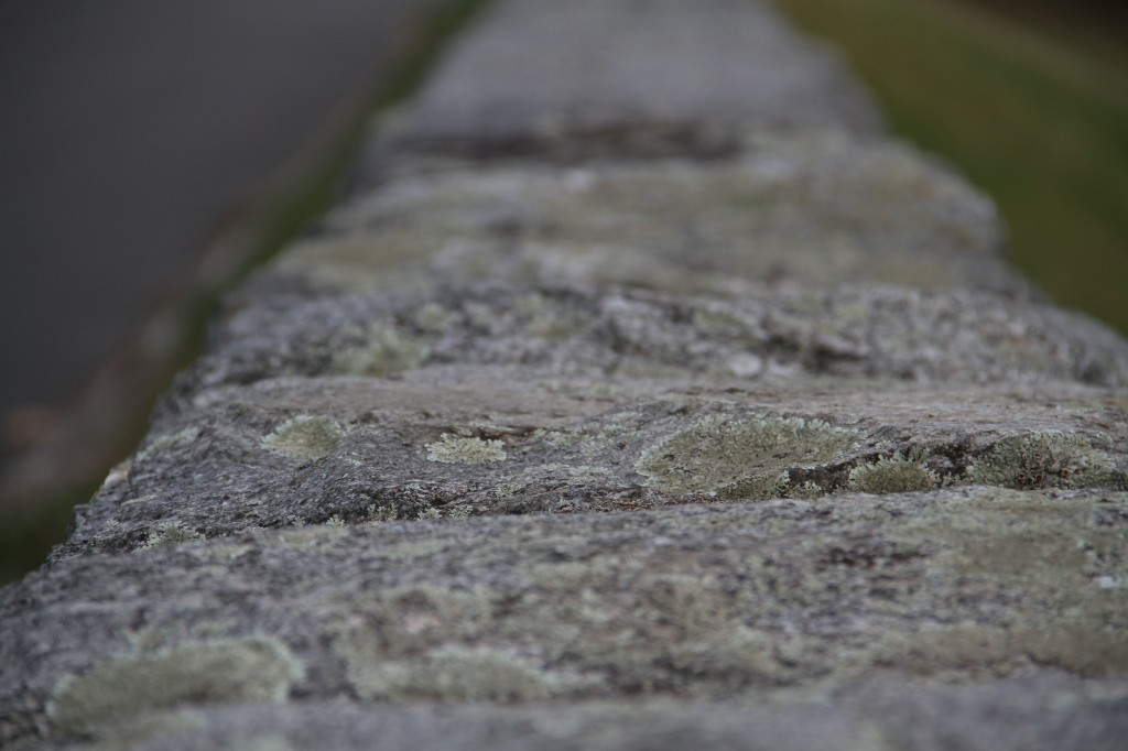 Lichen on the stone top of the retaining wall-roadway-damn.