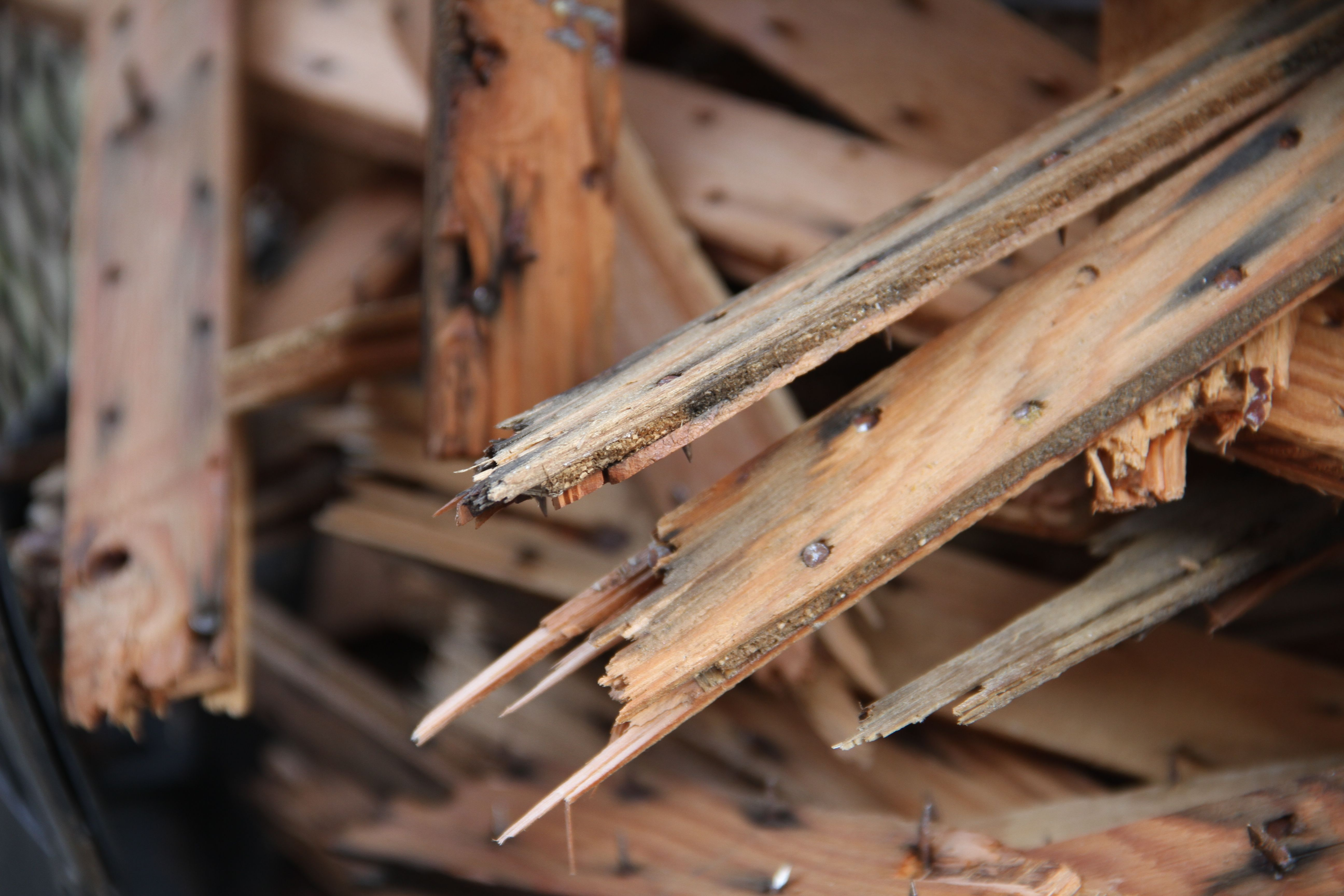 Beauty shot: tack strips. Jeff made a pile of these in our little chimenea outside where he intends to burn them up in one fell swoop.