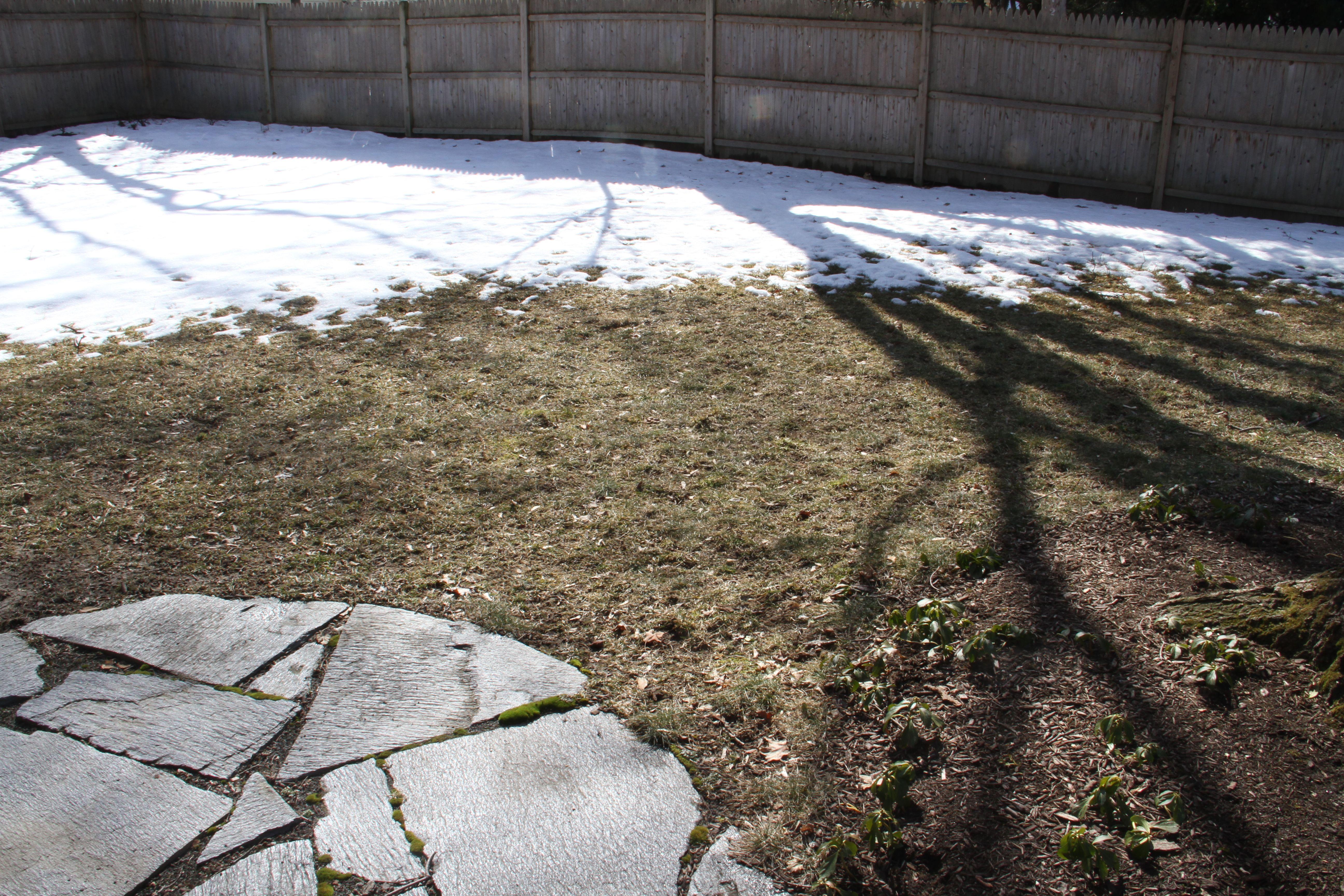 Beauty shot: snow, shadows, sunshine, emerging growth. Spring is good.
