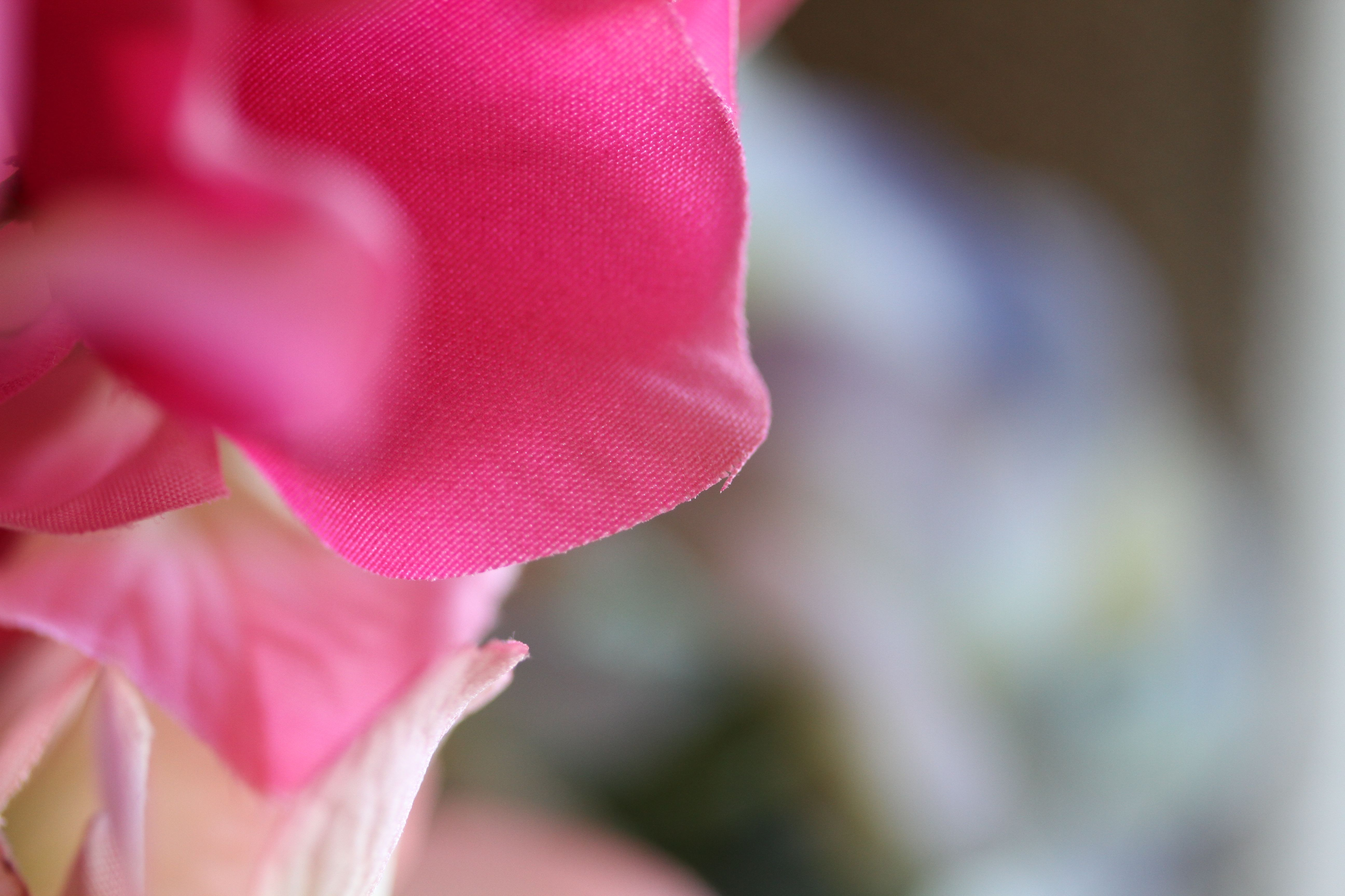 Beauty shot: Or this one. Makes me want to rub my face on the petals.