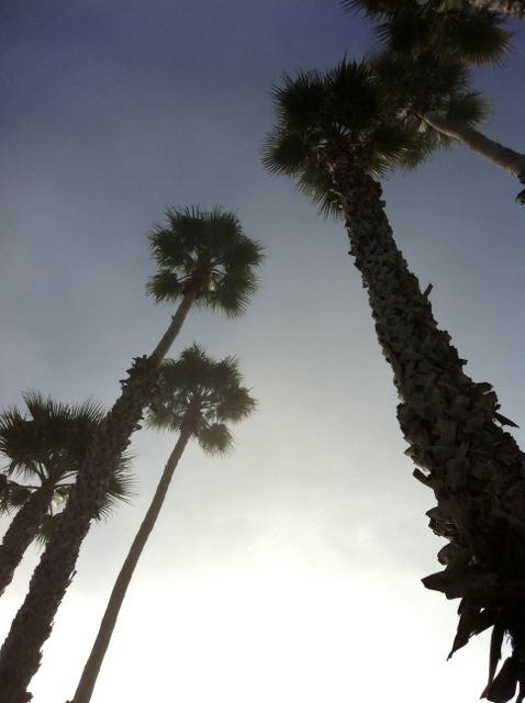 Chronologically, this happened at the end of our trip, but palm trees + fog = quintessential Santa Cruz.