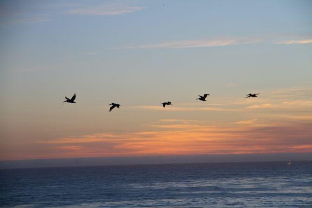 Pelicans leaving.