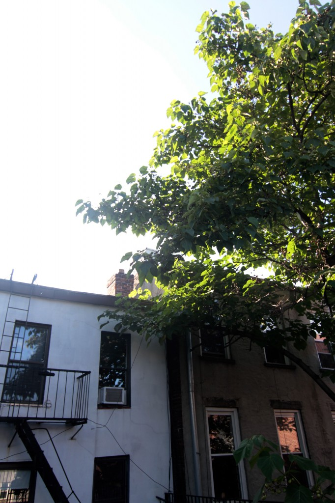 AFTER: Besides, our terrace is pretty shaded by the neighboring buildings, the other giantly tall trees, and the position of the sun throughout the day. I think we'll be ok umbrella-free.